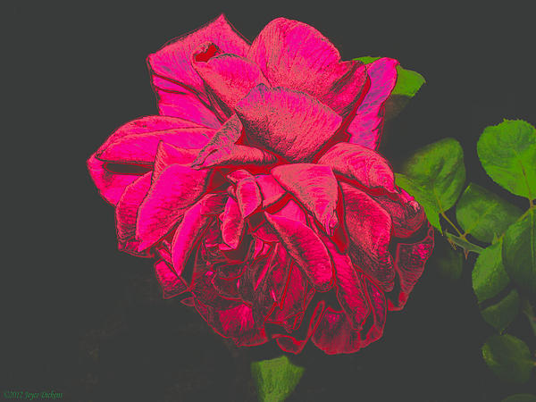 Joyce Dickens - The Ultimate Red Rose