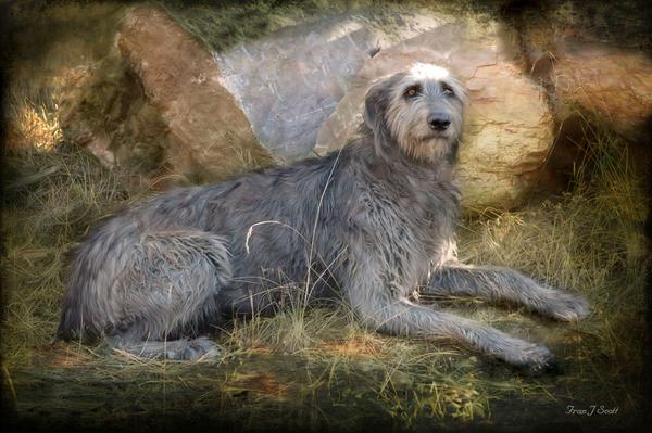 Fran J Scott - The Wolfhound