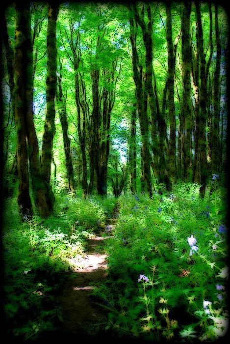 Kathy Sampson - Through the Trees