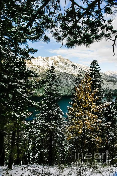 Mitch Shindelbower - Through The Trees