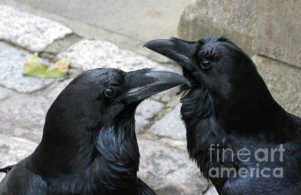 Ann Horn - Tower Ravens