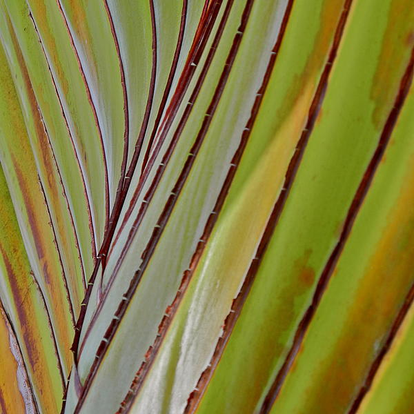 Kirsten Giving - Travelers Palm I V