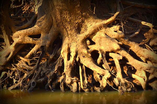 Lisa Wooten - Tree Art
