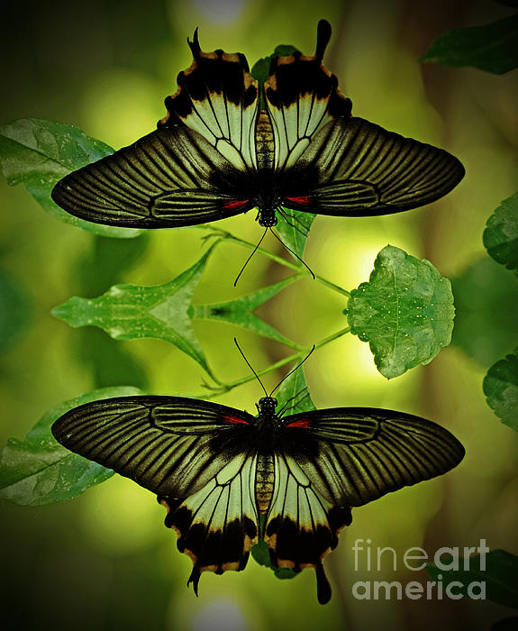 Inspired Nature Photography Fine Art Photography - Tropical Paradise