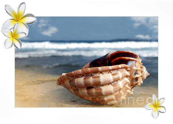 Kaye Menner - Tropical Shell 2