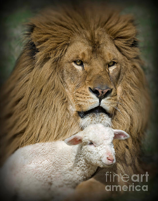 Wildlife Fine Art - True Companions