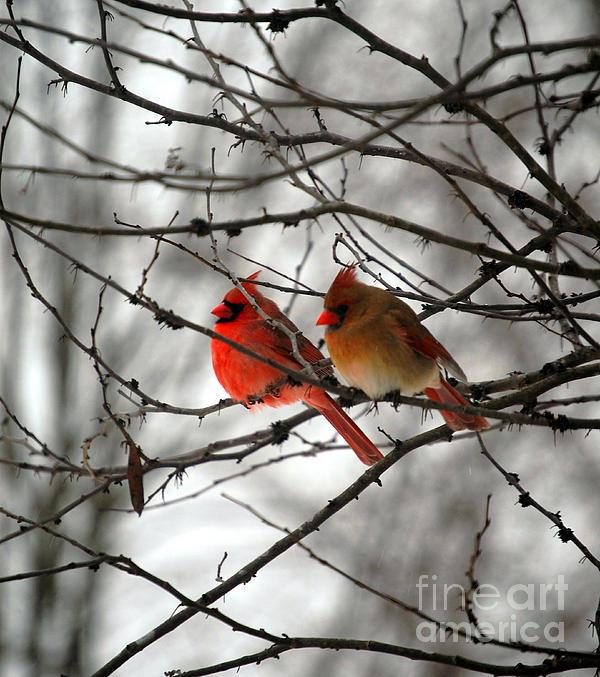 Peggy Franz - True Love Cardinal