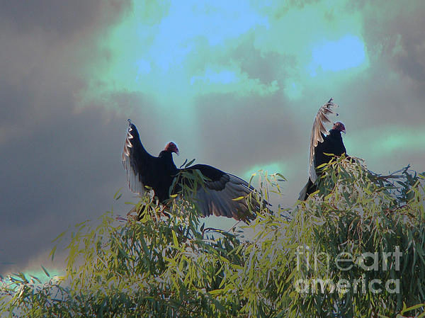 Beverly Guilliams - Turkey Vultures