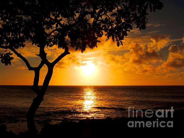 Kristine Merc - Turtle Bay Sunset