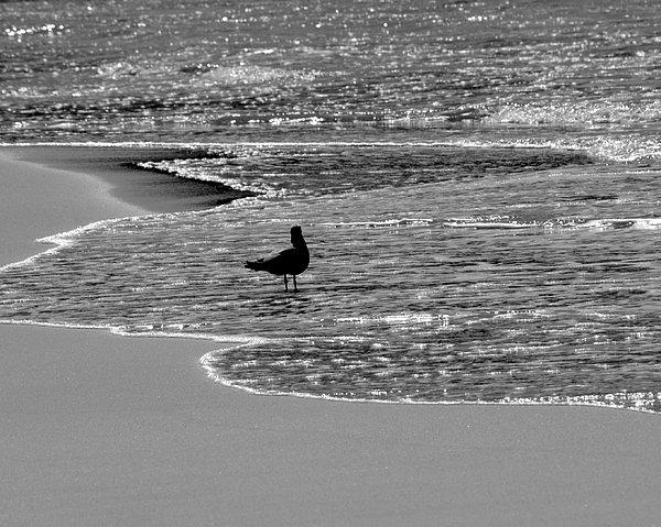 Athala Carole Bruckner - Walk On The Beach