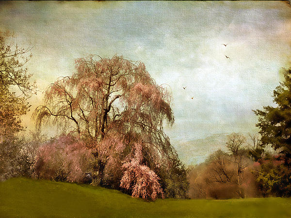 Jessica Jenney - Weeping Cherry