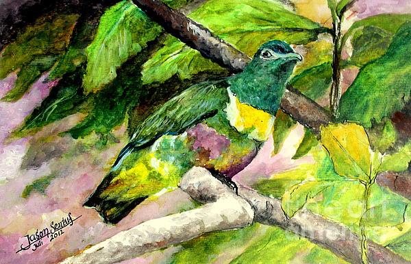 Jason Sentuf - White-bibbed Fruit Dove