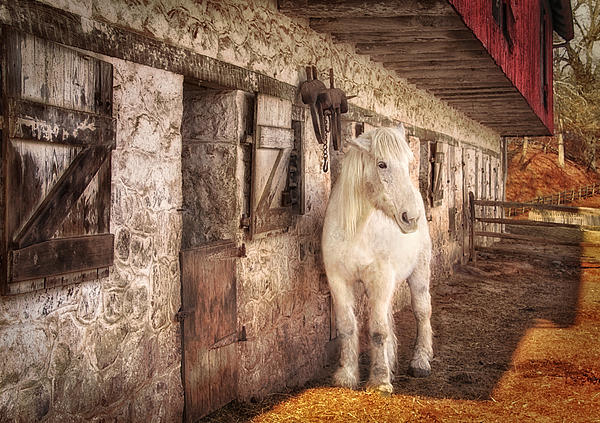 Carolyn Derstine - White horse by an old barn