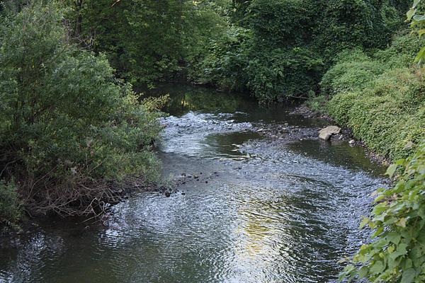 John Telfer - White Plains Stream