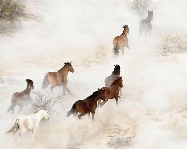 Dale Kesel - Wild Mustangs 1