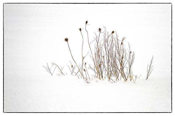 Eric Drumm - Winter Grasses