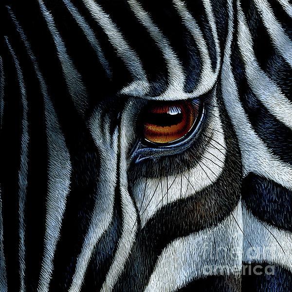 Jurek Zamoyski - Zebra