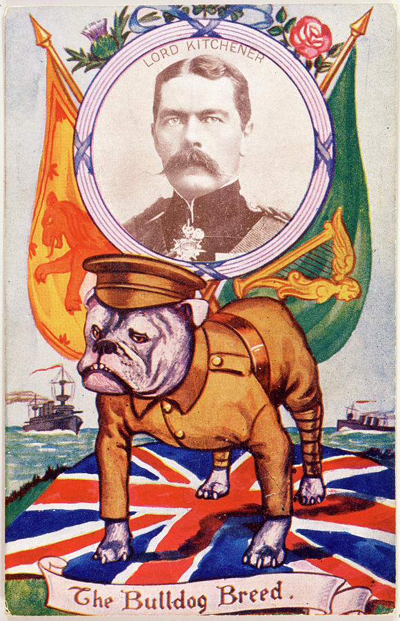 Bulldog Drawing -  A Patriotic Bulldog With  Lord by Mary Evans Picture Library