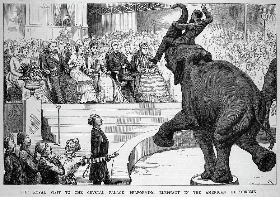 Performing Drawing -  A Performing Elephant  Entertains by Mary Evans Picture Library