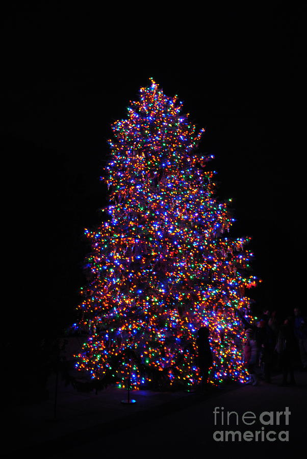 Longwood Gardens Photograph -  All Lit Up by Jacqueline M Lewis