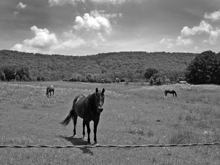 Horses Photograph -  Black And White Pasture With Three Horses by Anne Cameron Cutri