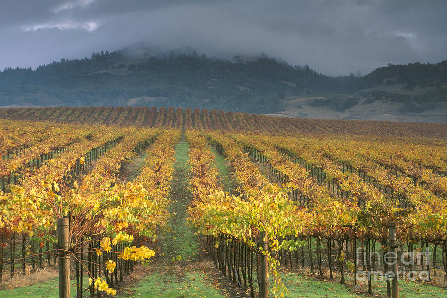 Wines Photograph -  Clouds Over Alexander Valley Vineyard On A Fall Morning by Gary Crabbe