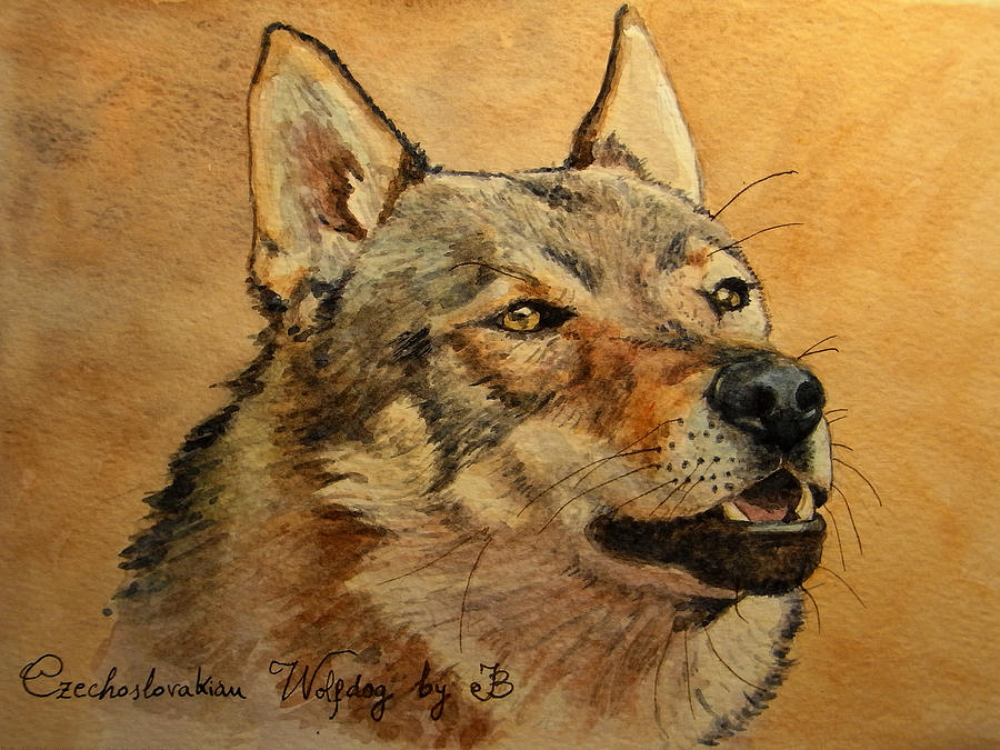 Czechoslovakian Painting -  Czechoslovakian Wolfdog Portrait by Juan  Bosco