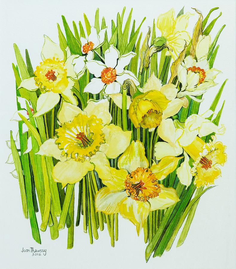 Still-life Painting -  Daffodils And Narcissus by Joan Thewsey