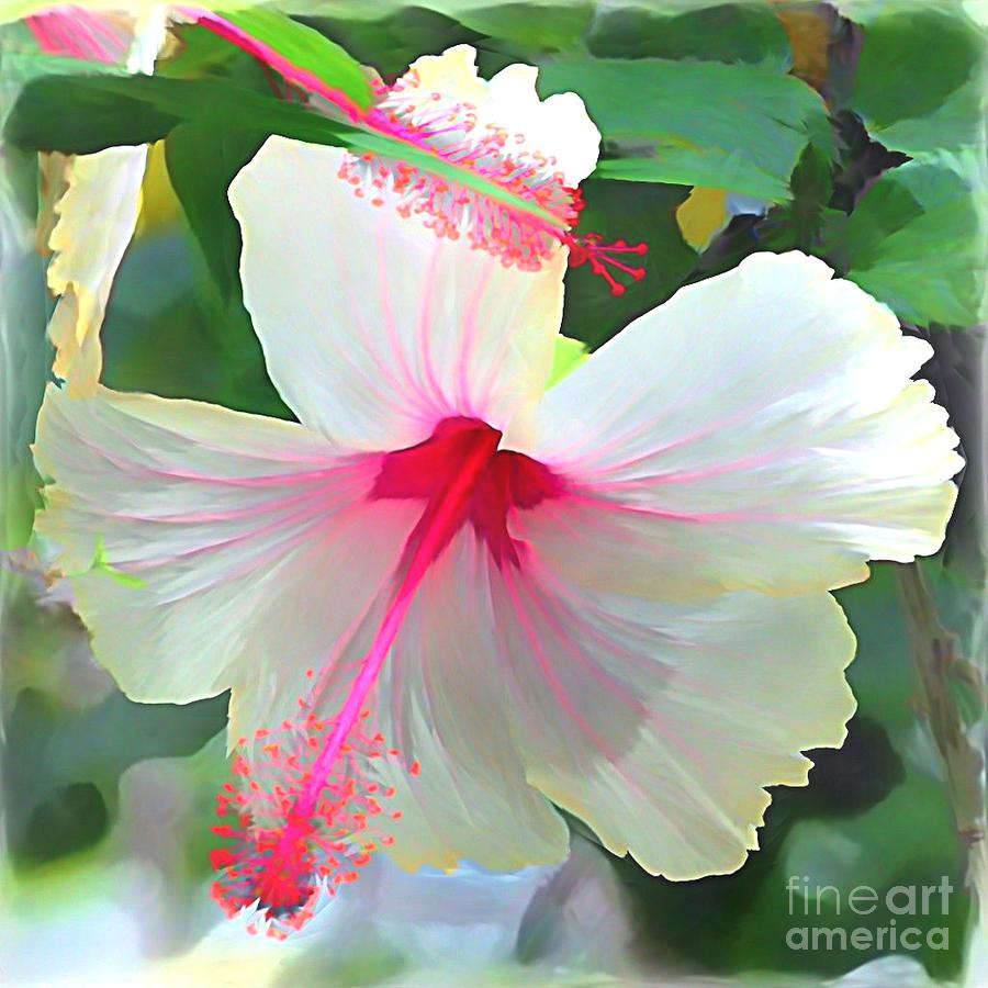 Delicate beauty hibiscus by peggy franz hawaiian hibiscus flower photograph delicate beauty hibiscus by peggy franz izmirmasajfo