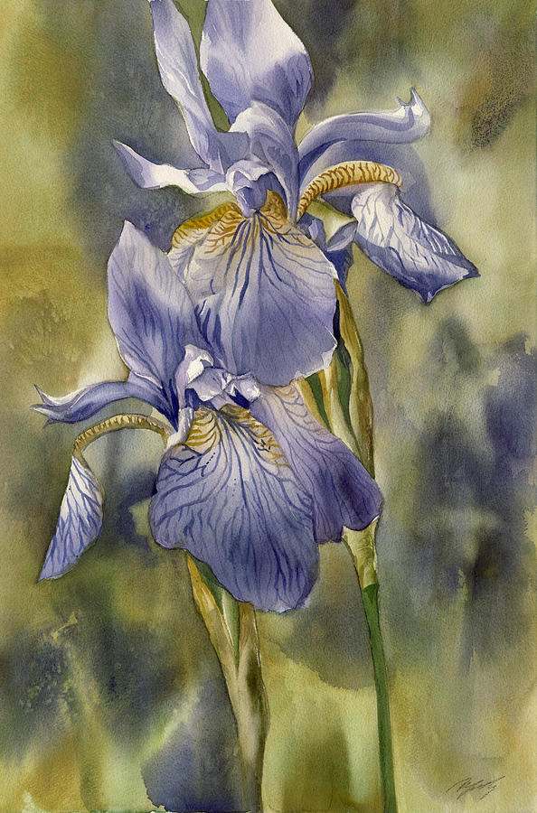 Watercolor Painting -  Double Blue Irises by Alfred Ng