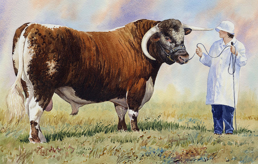 Cattle Breeds Painting -  English Longhorn Bull by Anthony Forster