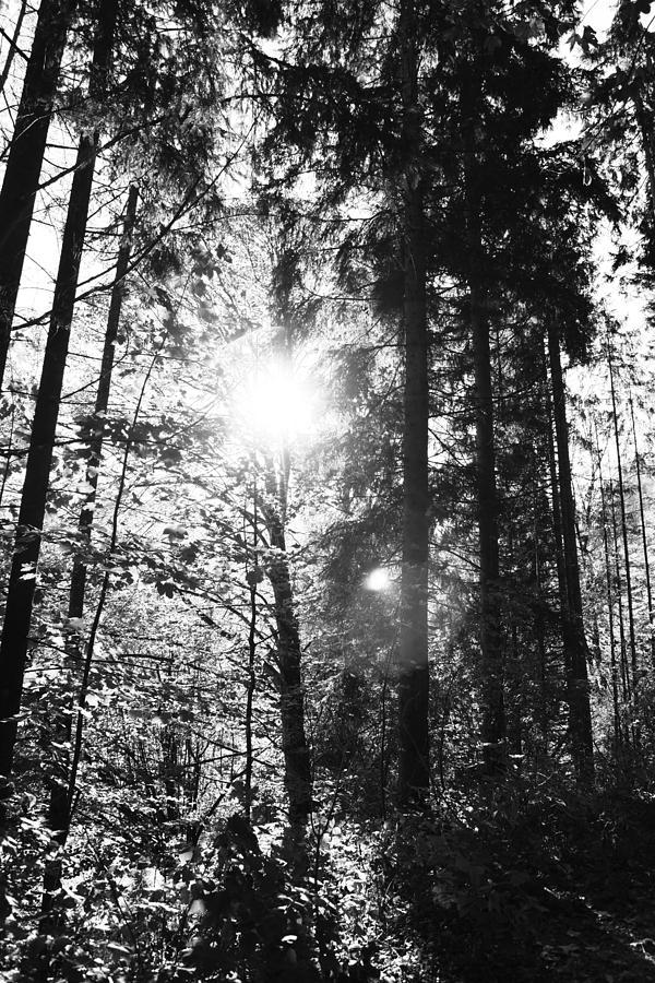 Wald Photograph -  Forest by Falko Follert