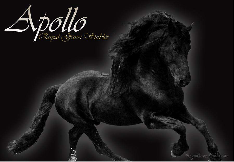 Friesian Stallion Photograph by Royal Grove Fine Art