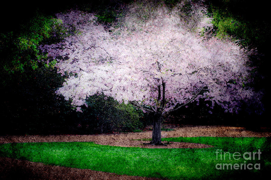 Trees Photograph -  Ghostly Spring by Bobbi Feasel