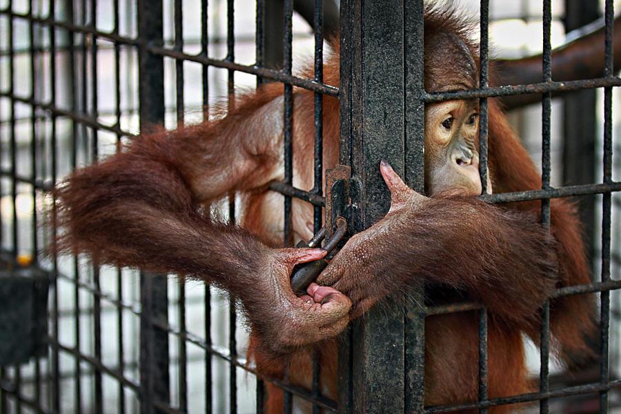 Animal Photograph -  Help Me Out by Haryo Suryo Kusumo