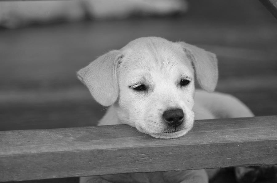 Animal Photograph -  It Was A Hard Day by Michelle Meenawong
