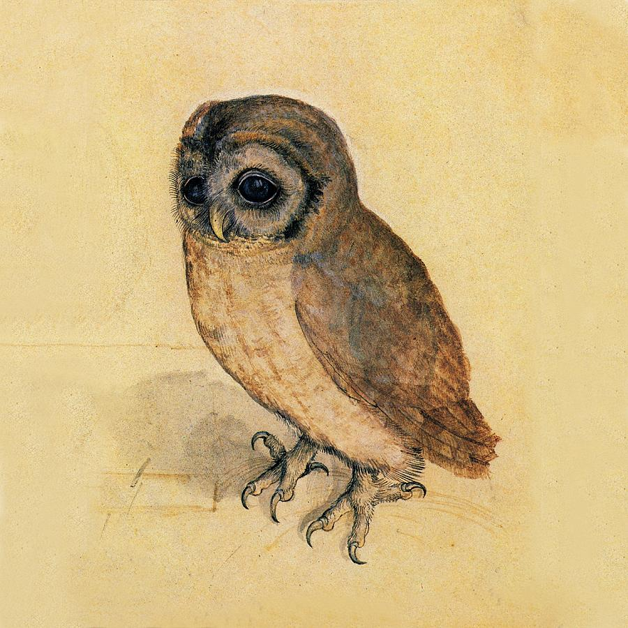 Little Owl by Albrecht Durer