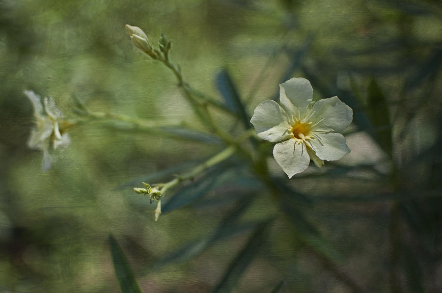 Flowers Photograph - ... by Mario Celzner