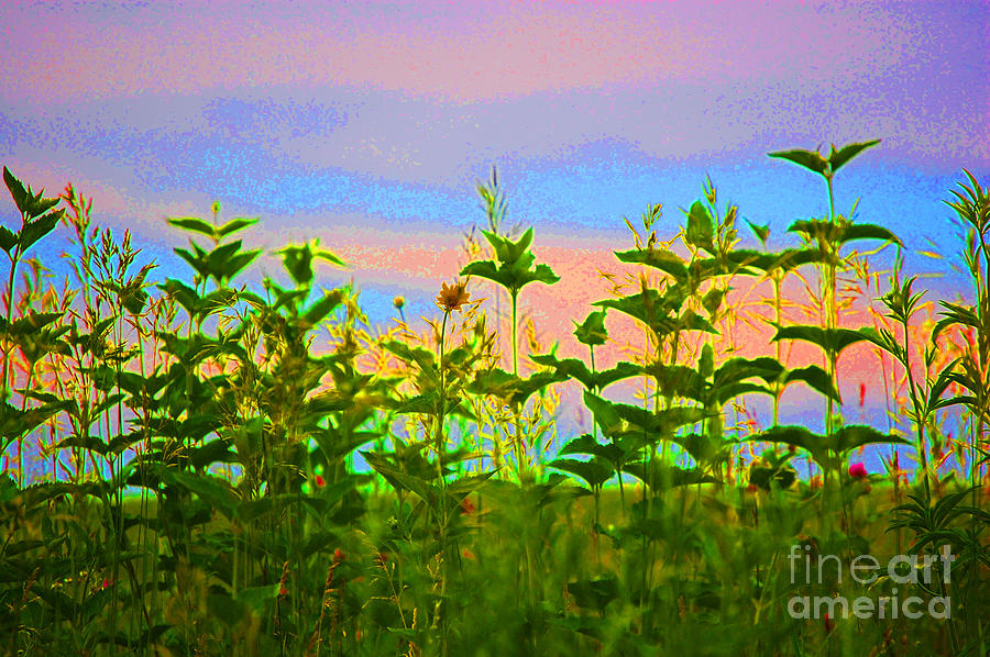 First Star Photograph -  Meadow Magic by First Star Art