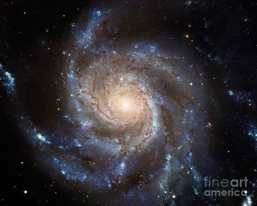 Astronomy Photograph -  Messier 101 by Barbara McMahon