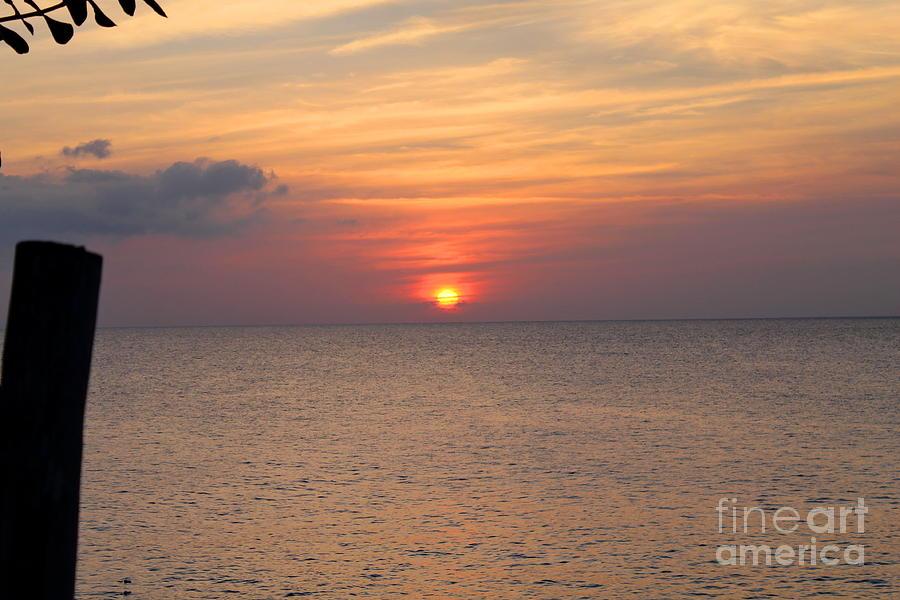 Negril Rose Sunset 2 by Debbie Levene