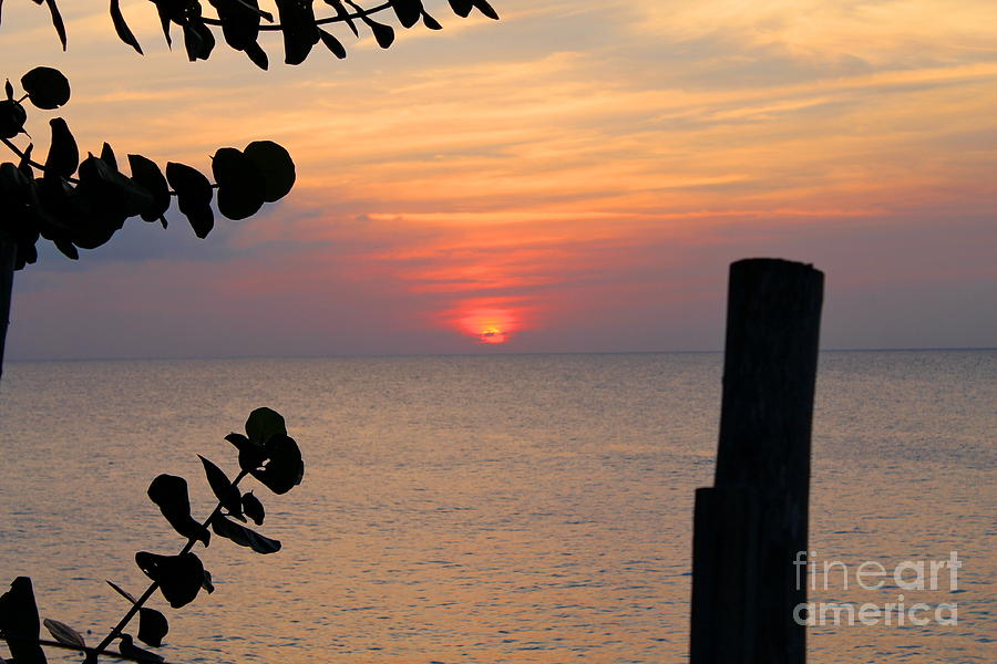 Negril Rose Sunset 3 by Debbie Levene
