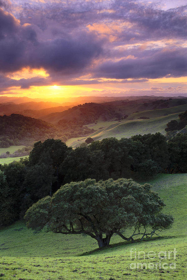 Oak Trees And Green Grass On Hills Over Valley At Sunset Photograph By Gary Crabbe