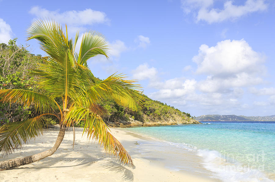Palm Tree On Caribbean Beach by Ken Brown