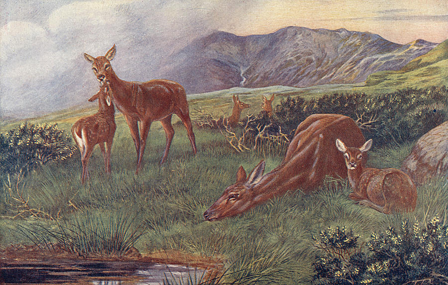 Red deer dating site