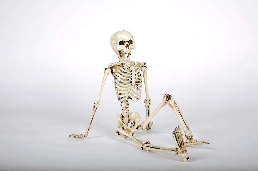 Skeleton Model Photograph by Matthew Steigbigel