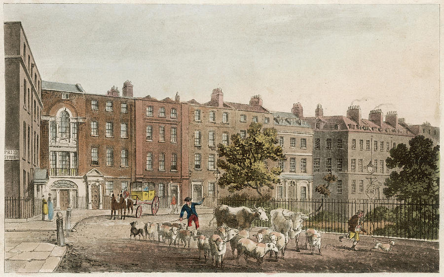 Soho Drawing -  Soho Square, With Cattle         Date by Mary Evans Picture Library