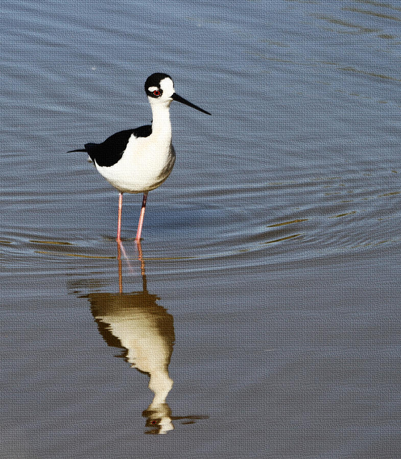 Grp Photograph -  Stilt Looking At Me by Tom Janca