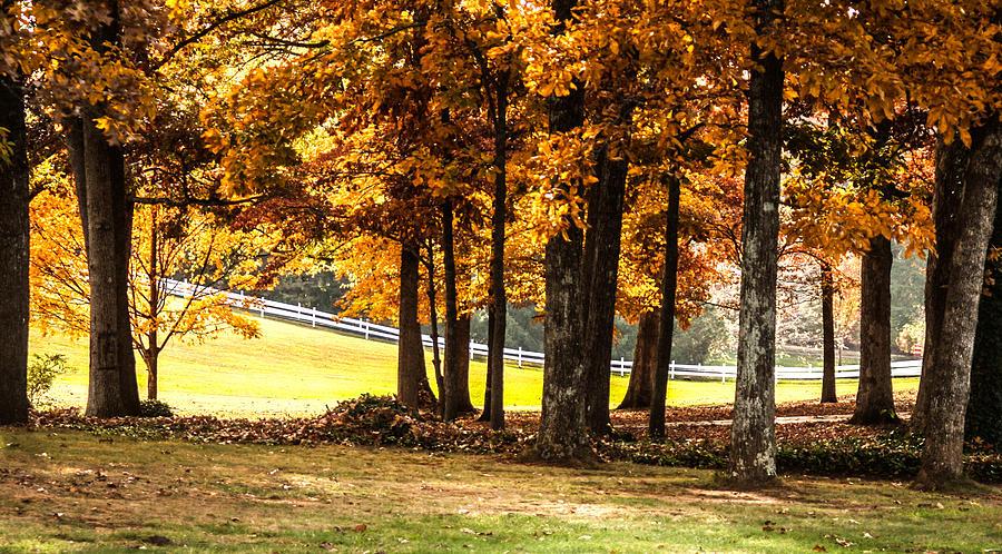Autumn Photograph -  Streaming Sunrays by Linda A Waterhouse