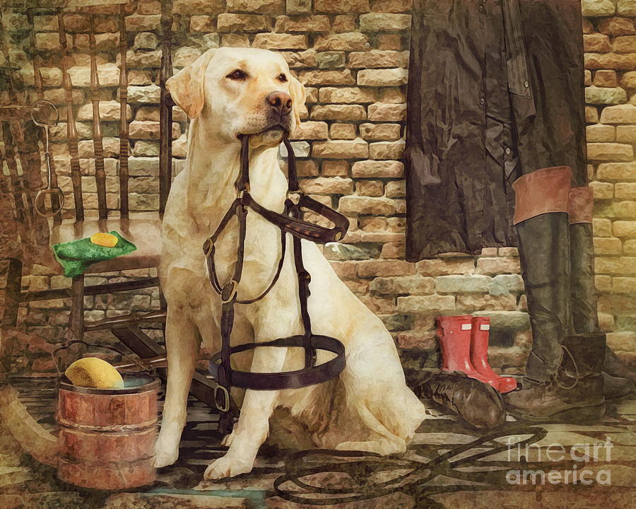 Labrador Photograph -  Tack Cleaning Day by Trudi Simmonds